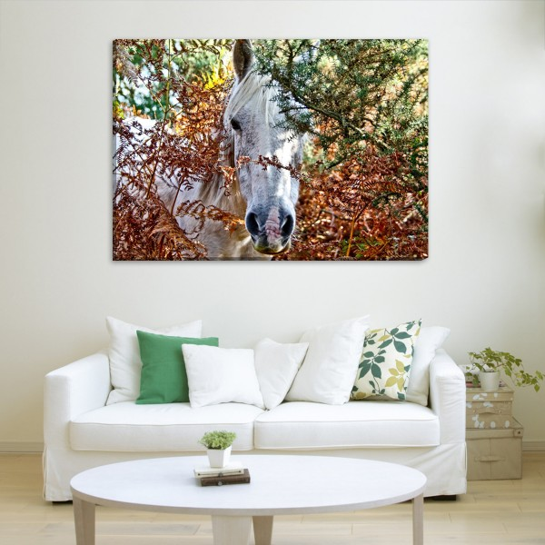 beautiful autumn horse canvas frames Rs.1-499 Price Online ...